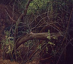 1983_arbre_ajagut